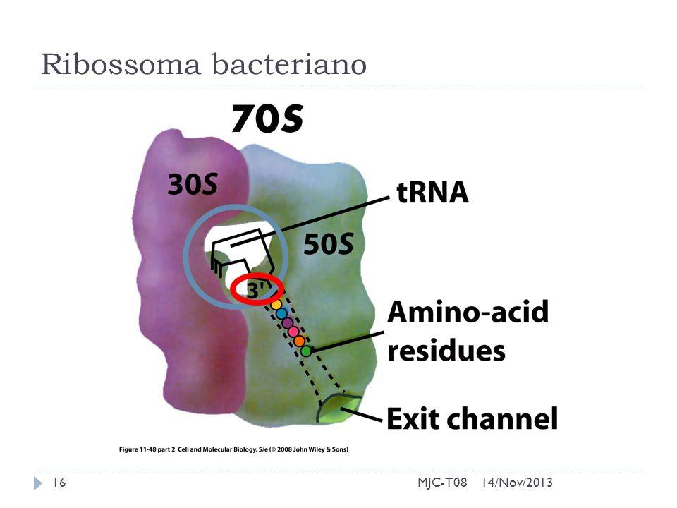 Ribossoma bacteriano MJC-T08 14/Nov/2013