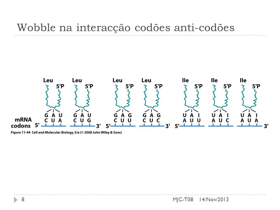 Wobble na interacção codões anti-codões