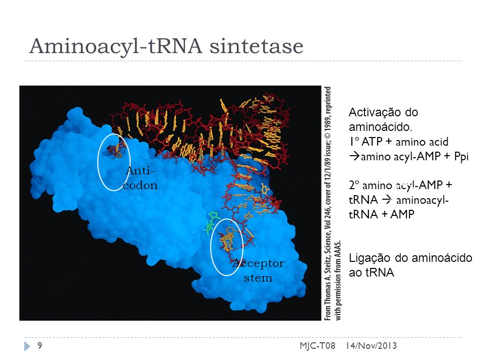 Aminoacyl-tRNA sintetase