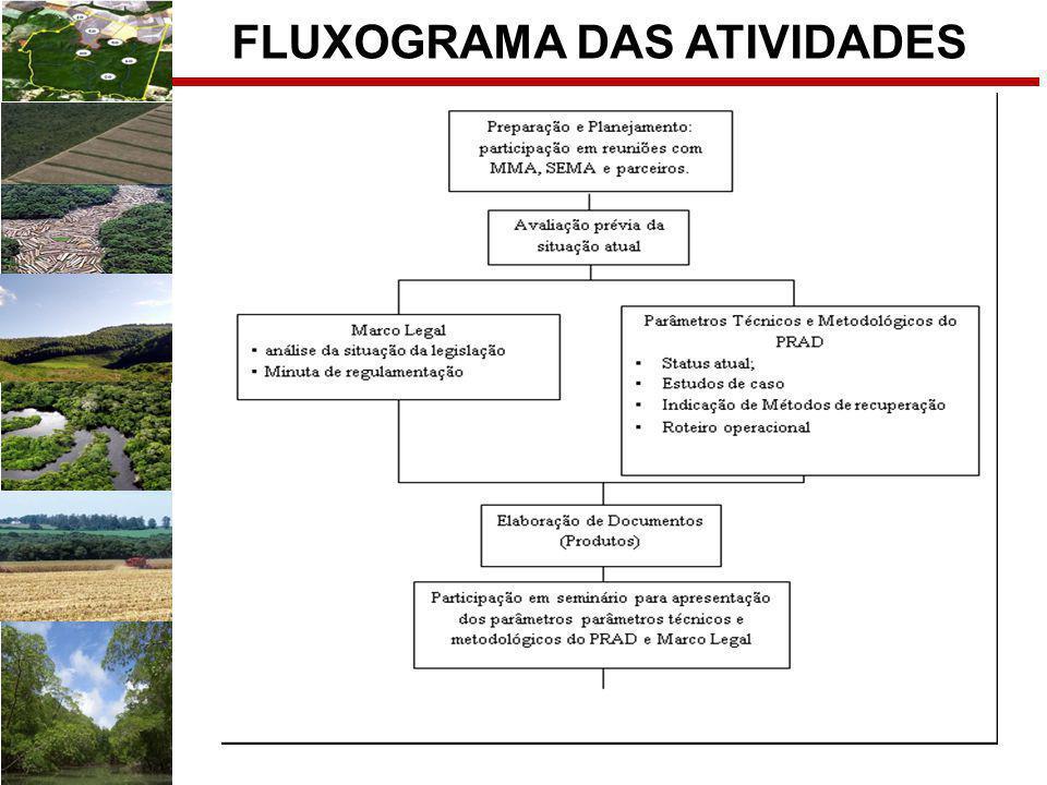 FLUXOGRAMA DAS ATIVIDADES