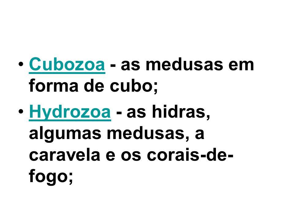 Cubozoa - as medusas em forma de cubo;