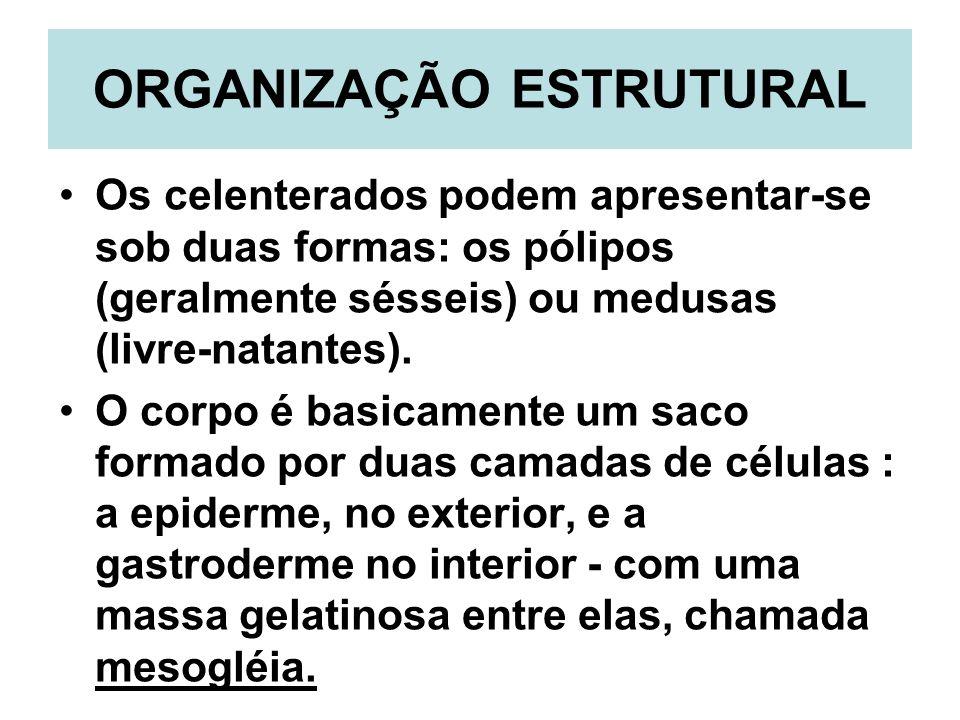 ORGANIZAÇÃO ESTRUTURAL