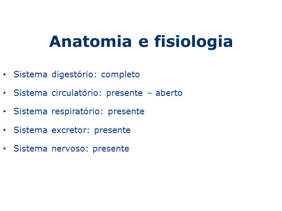Anatomia e fisiologia Sistema digestório: completo
