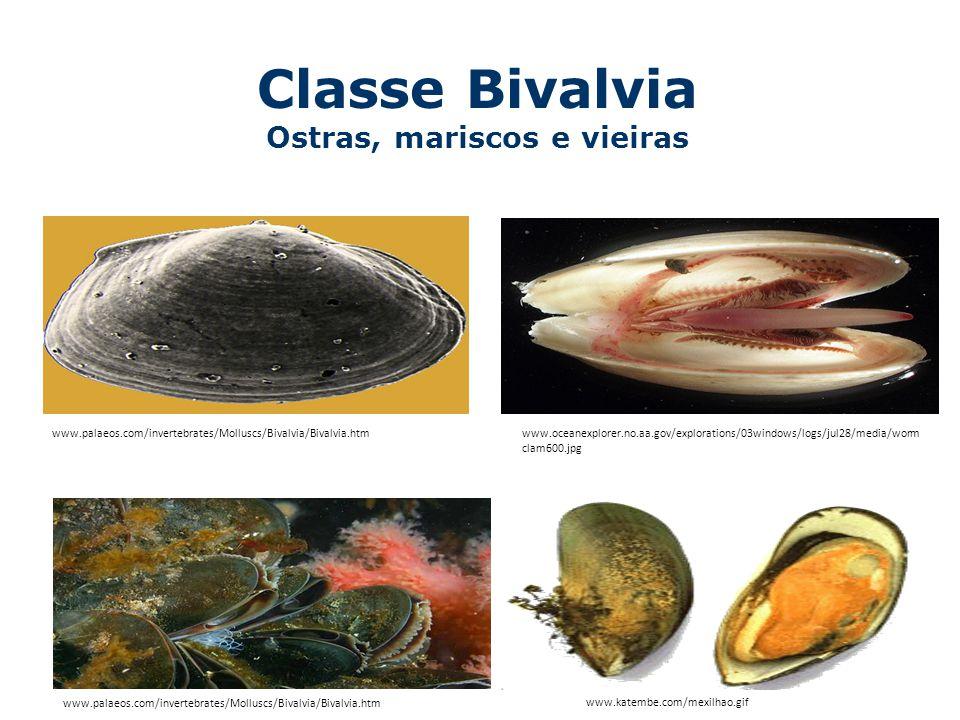 Classe Bivalvia Ostras, mariscos e vieiras