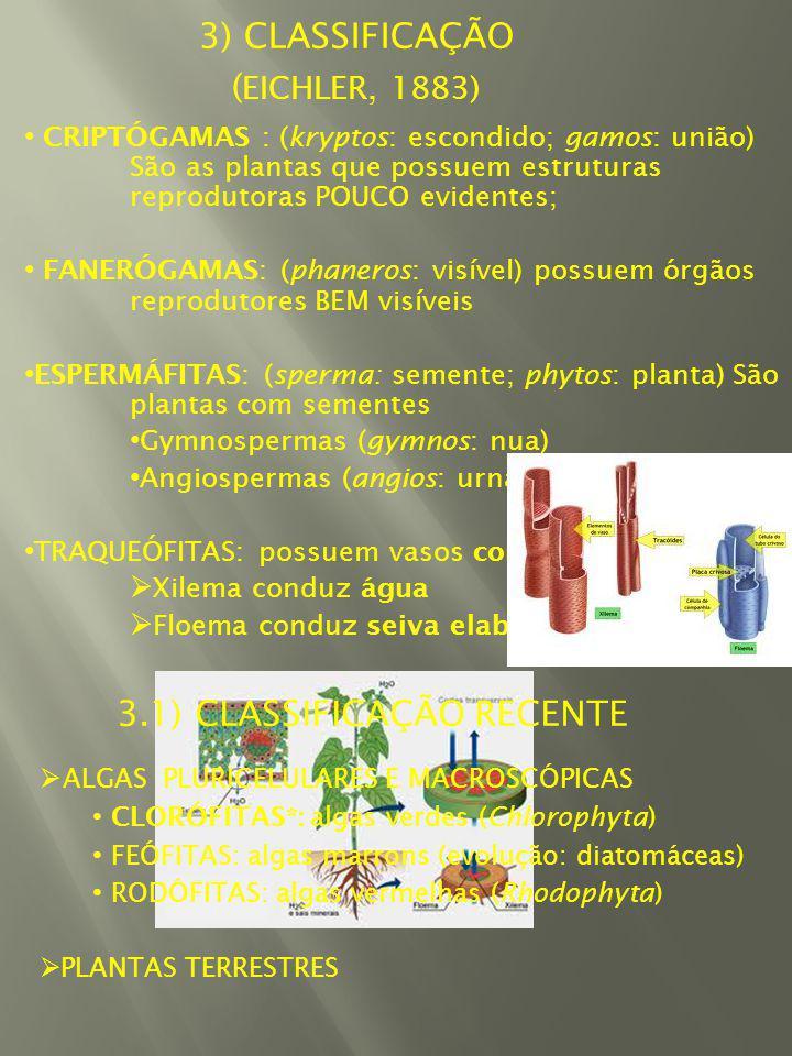 3.1) CLASSIFICAÇÃO RECENTE