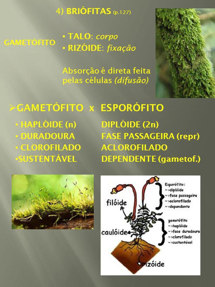 GAMETÓFITO x ESPORÓFITO
