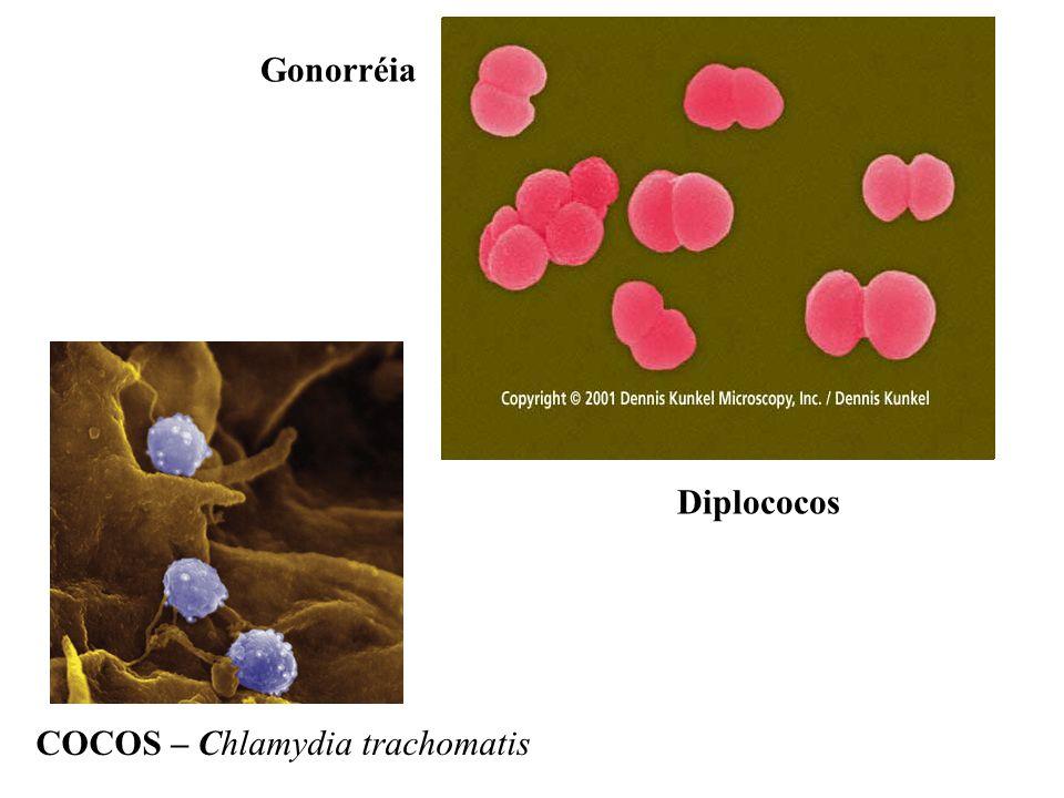 Gonorréia Diplococos COCOS – Chlamydia trachomatis