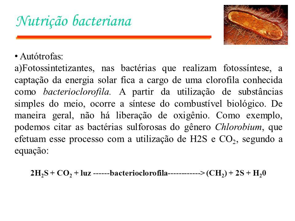 Nutrição bacteriana Autótrofas: