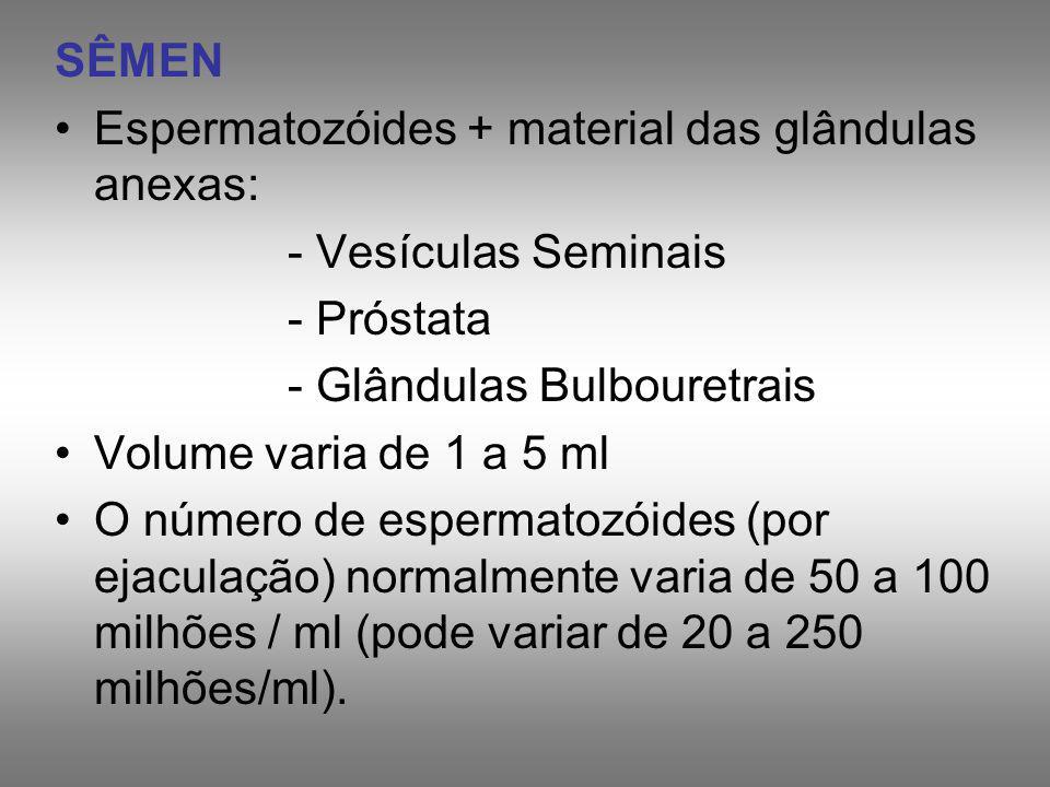 SÊMEN Espermatozóides + material das glândulas anexas: - Vesículas Seminais. - Próstata. - Glândulas Bulbouretrais.