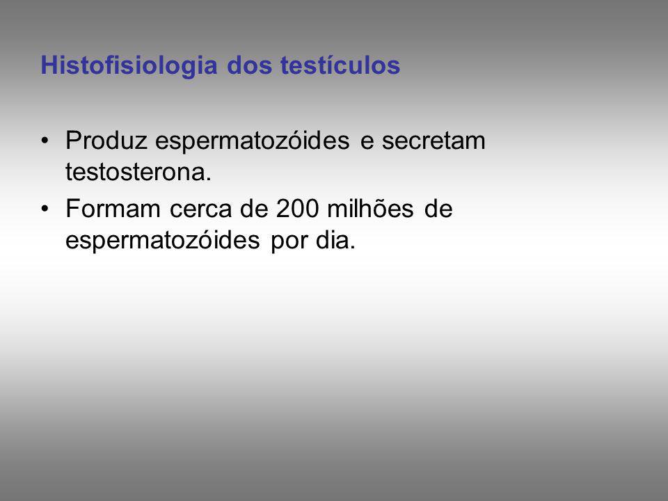 Histofisiologia dos testículos