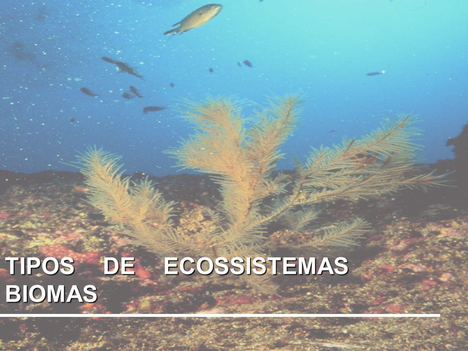 TIPOS DE ECOSSISTEMAS BIOMAS