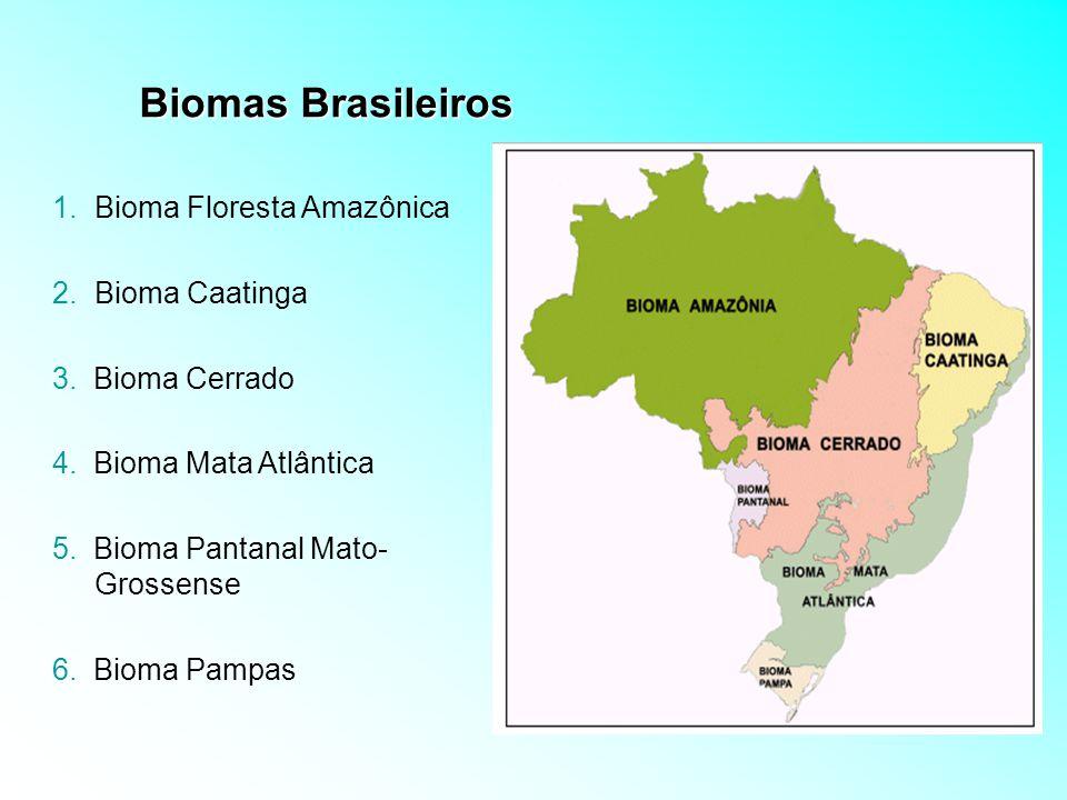 Biomas Brasileiros Bioma Floresta Amazônica Bioma Caatinga