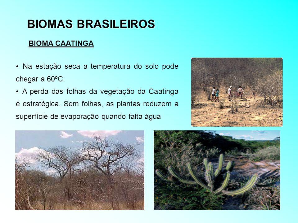 BIOMAS BRASILEIROS BIOMA CAATINGA