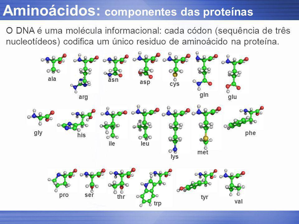 Aminoácidos: componentes das proteínas