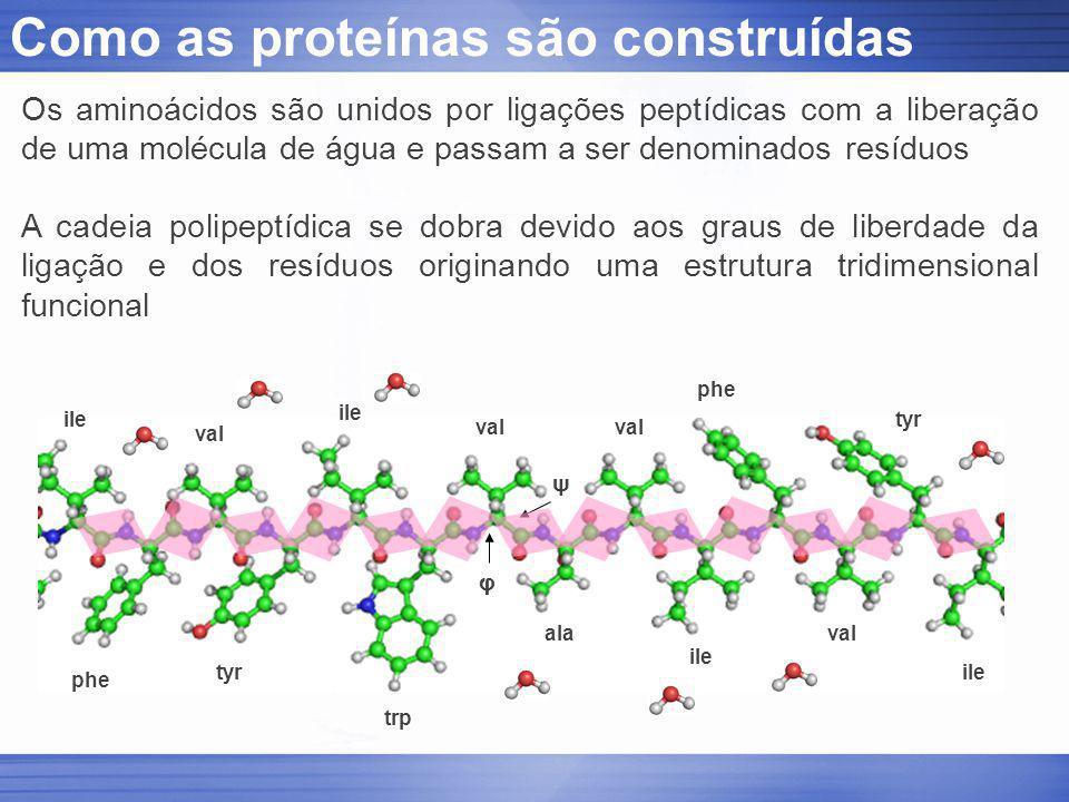 Como as proteínas são construídas