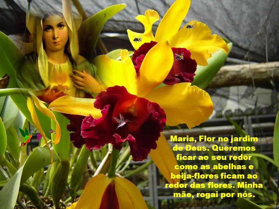 Maria, Flor no jardim de Deus