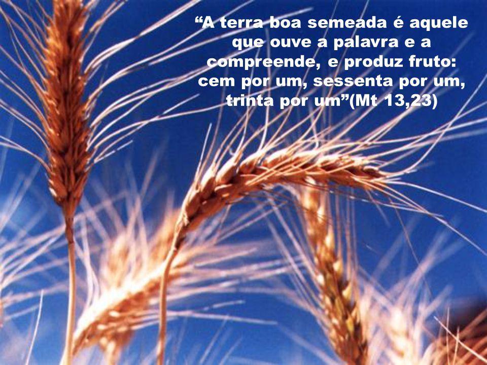 A terra boa semeada é aquele que ouve a palavra e a compreende, e produz fruto: cem por um, sessenta por um, trinta por um (Mt 13,23)