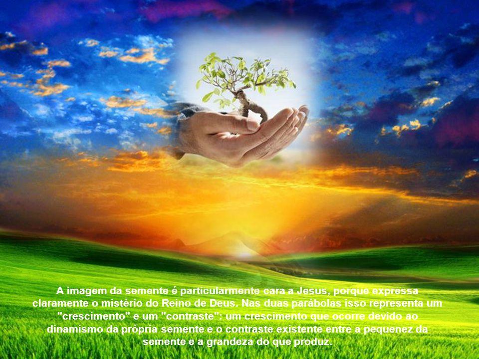 A imagem da semente é particularmente cara a Jesus, porque expressa claramente o mistério do Reino de Deus.