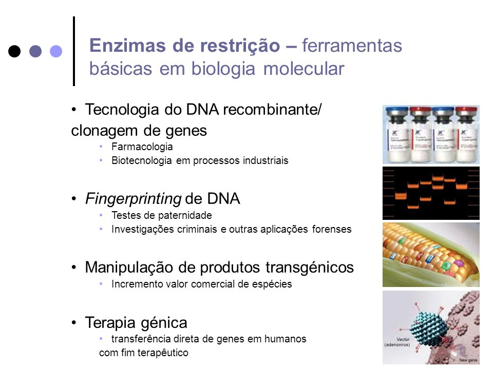 Enzimas de restrição – ferramentas básicas em biologia molecular