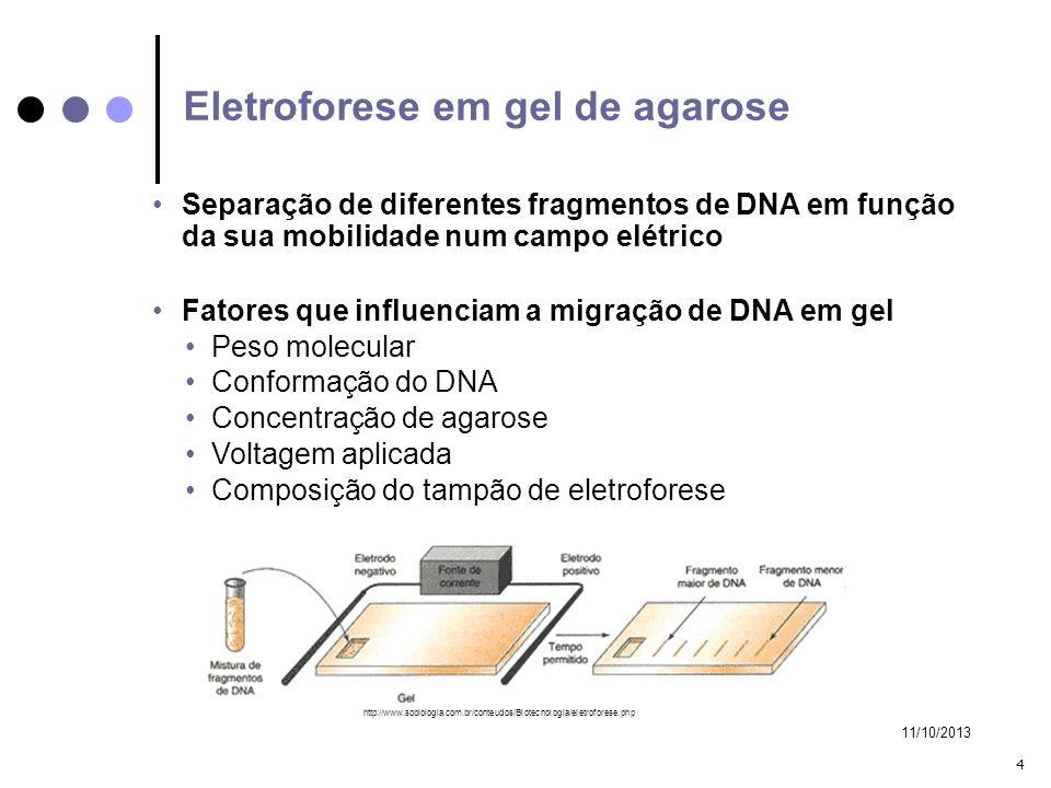 Eletroforese em gel de agarose
