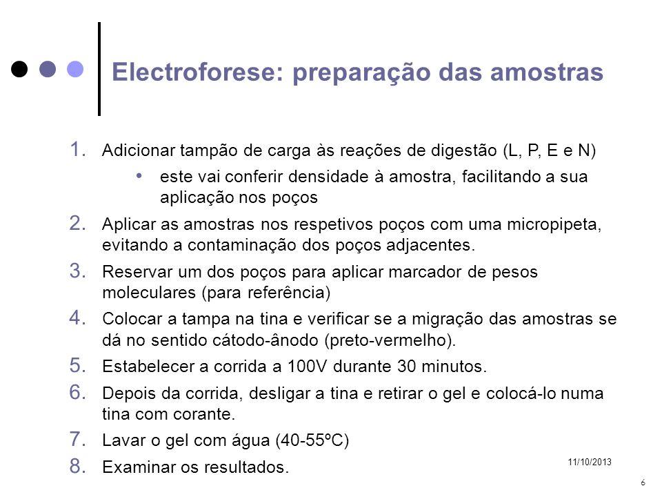 Electroforese: preparação das amostras