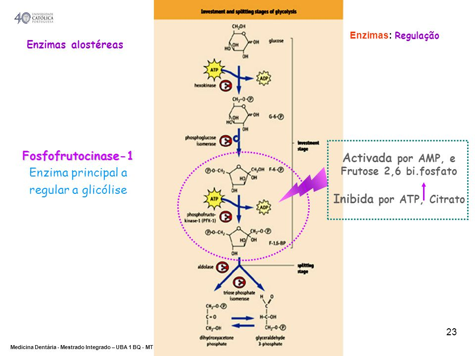 Inibida por ATP, Citrato