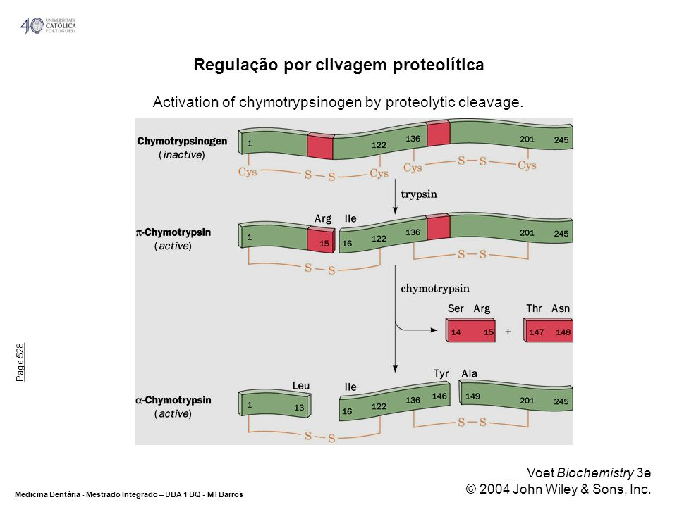 Regulação por clivagem proteolítica Activation of chymotrypsinogen by proteolytic cleavage.