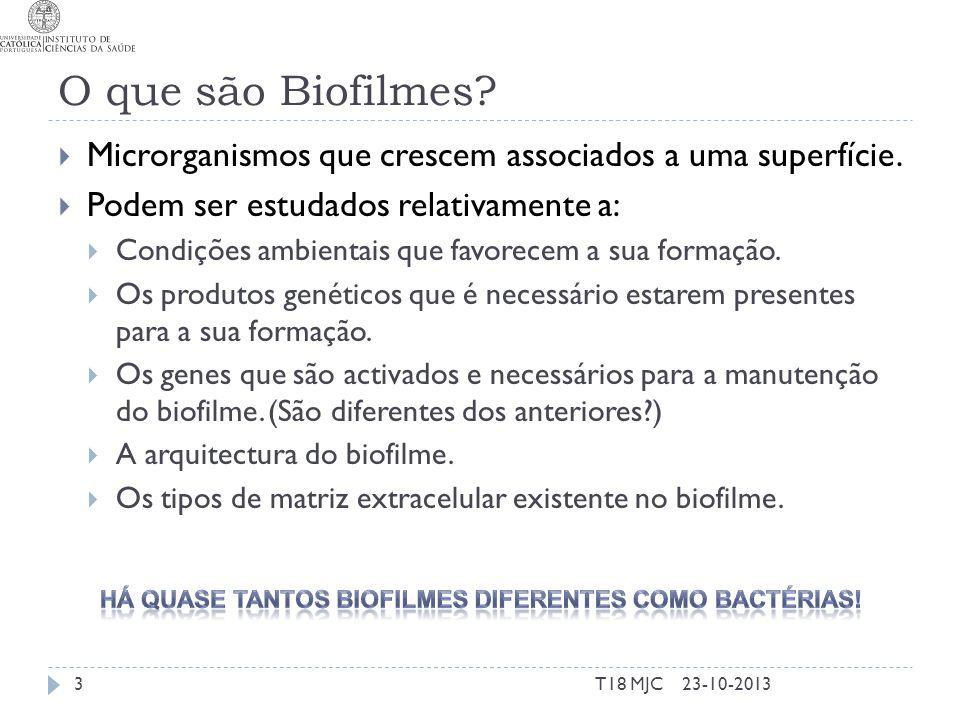 Há quase tantos biofilmes diferentes como bactérias!