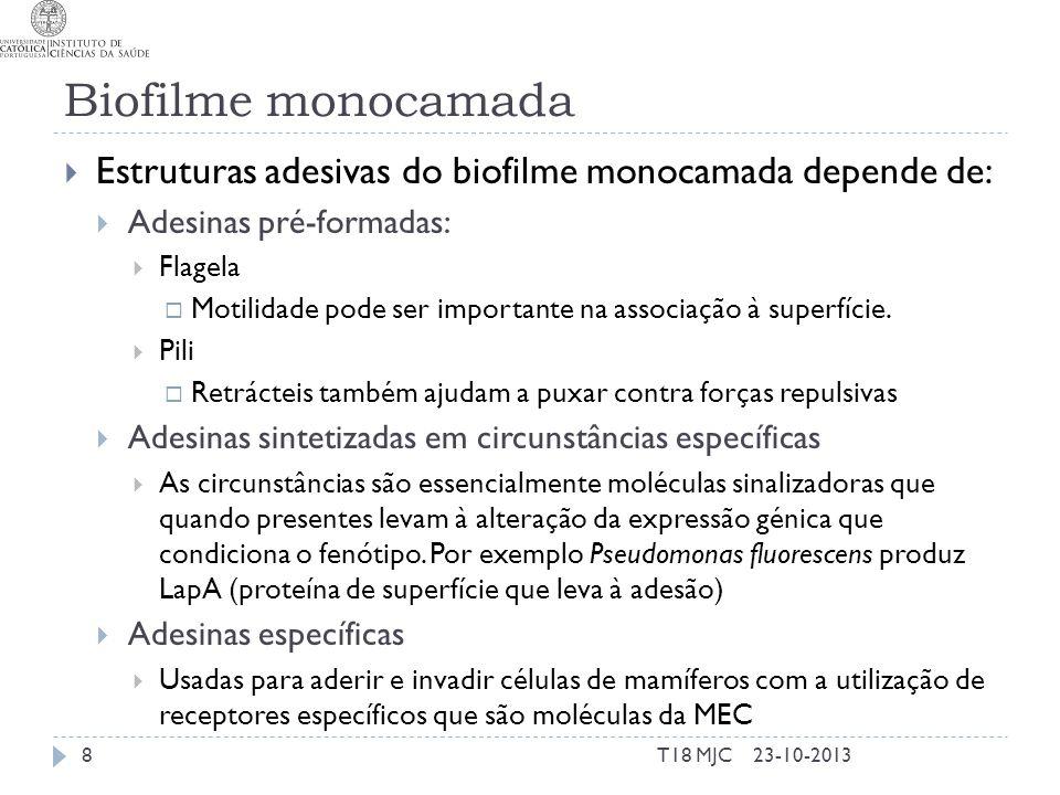 Biofilme monocamada Estruturas adesivas do biofilme monocamada depende de: Adesinas pré-formadas: Flagela.