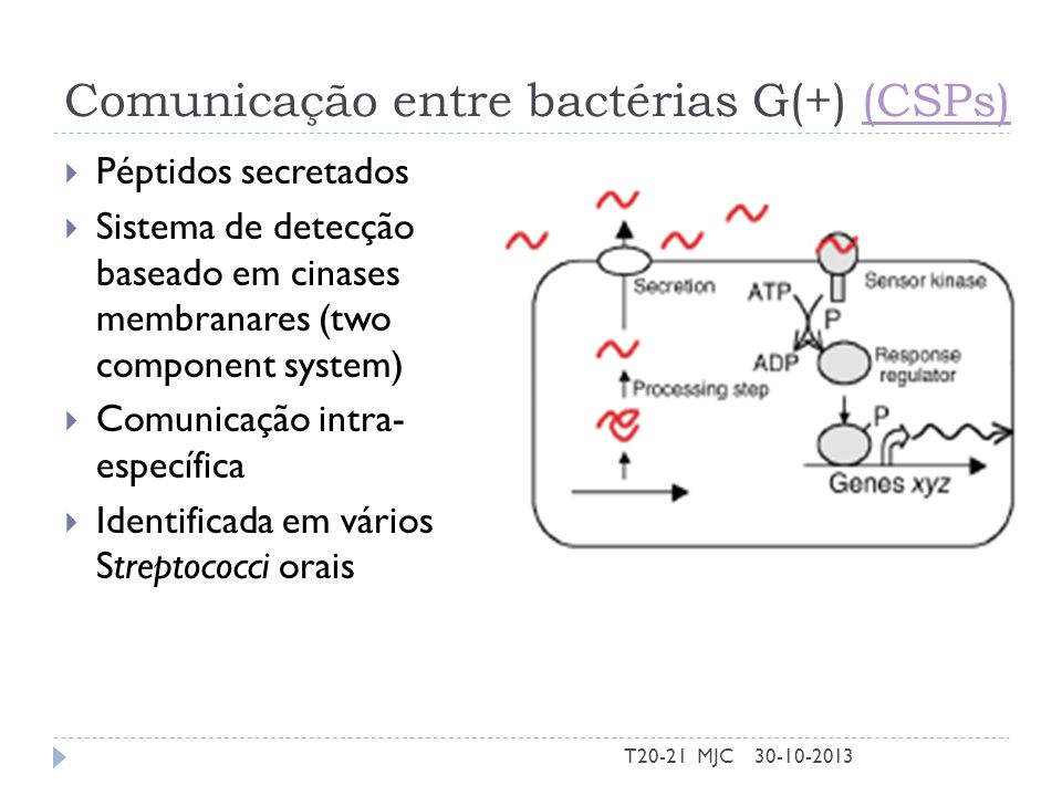 Comunicação entre bactérias G(+) (CSPs)