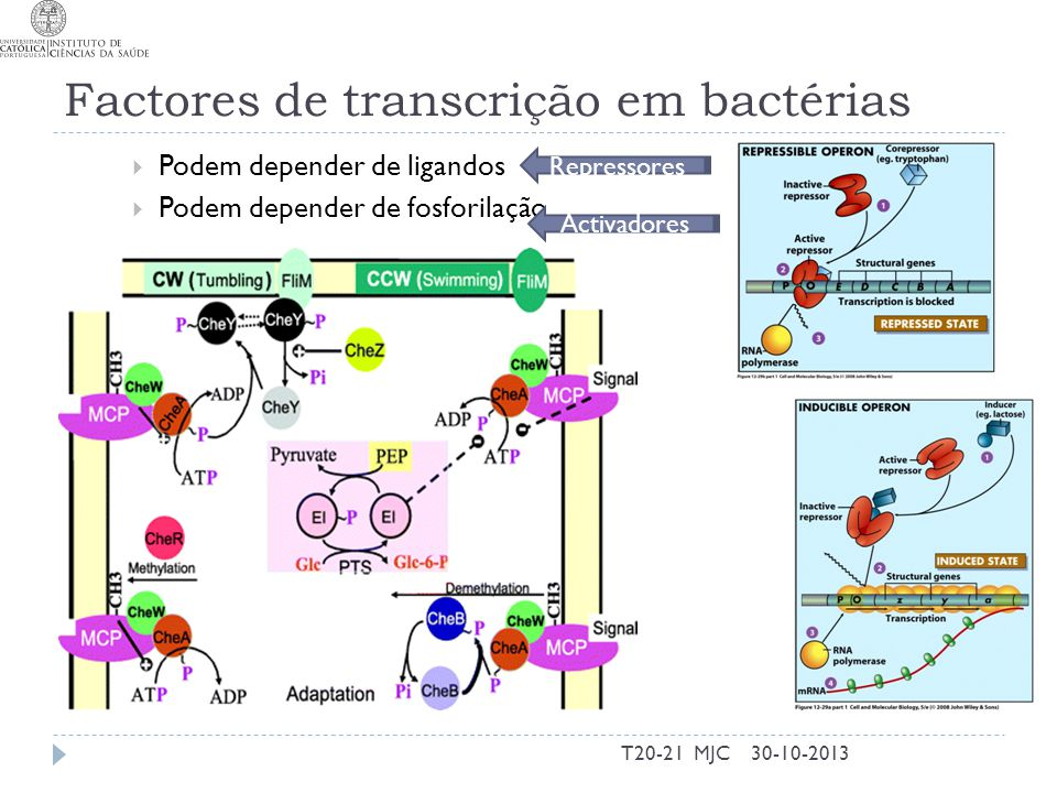 Factores de transcrição em bactérias
