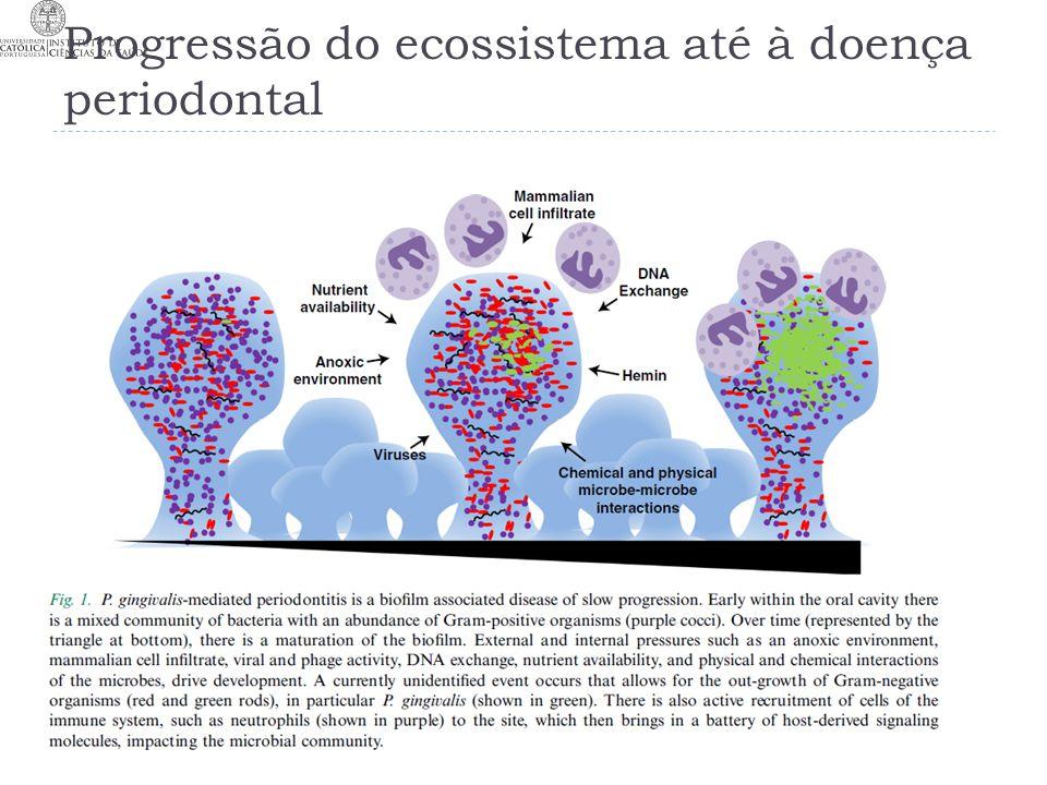 Progressão do ecossistema até à doença periodontal