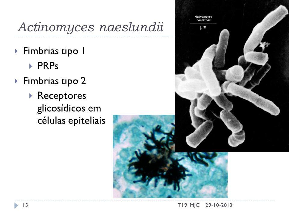 Actinomyces naeslundii