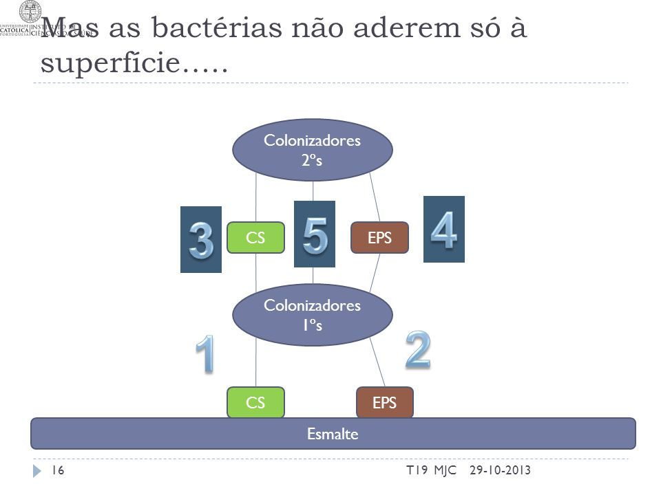 Mas as bactérias não aderem só à superfície…..