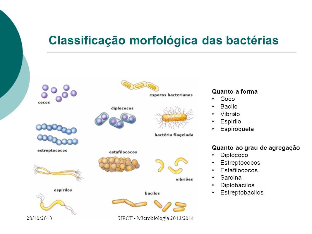 Classificação morfológica das bactérias