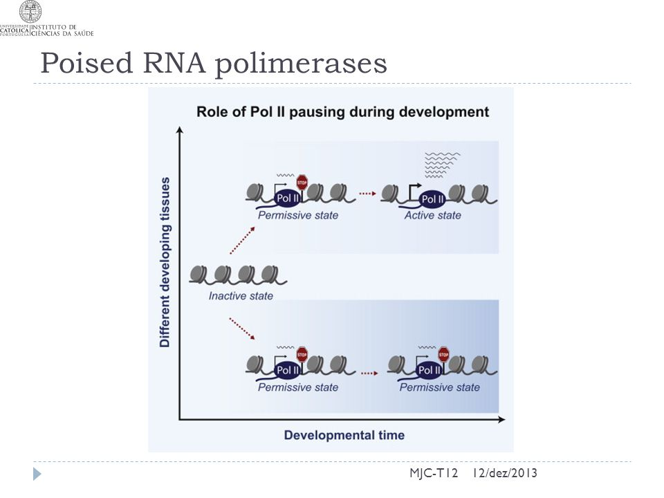 Poised RNA polimerases