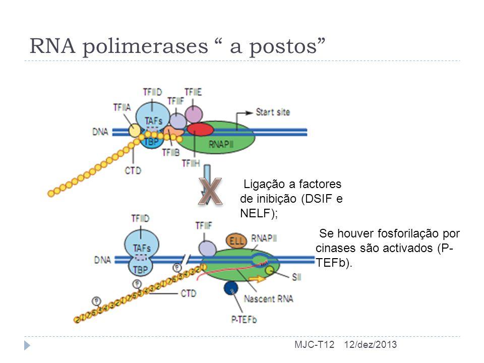 RNA polimerases a postos