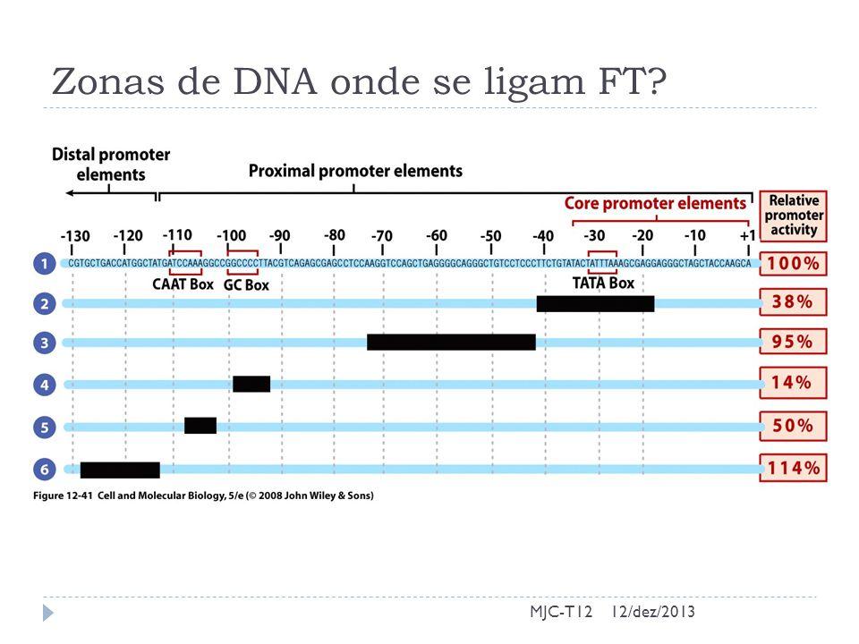 Zonas de DNA onde se ligam FT