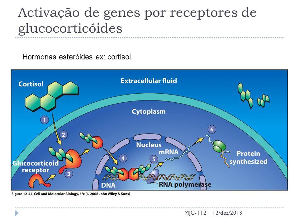 Activação de genes por receptores de glucocorticóides
