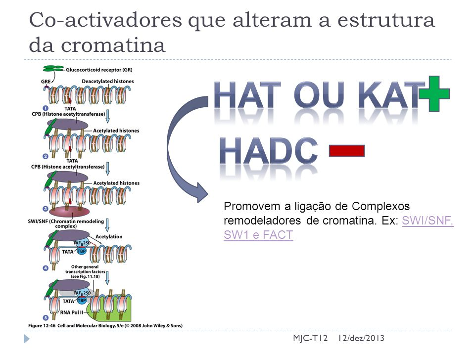 Co-activadores que alteram a estrutura da cromatina