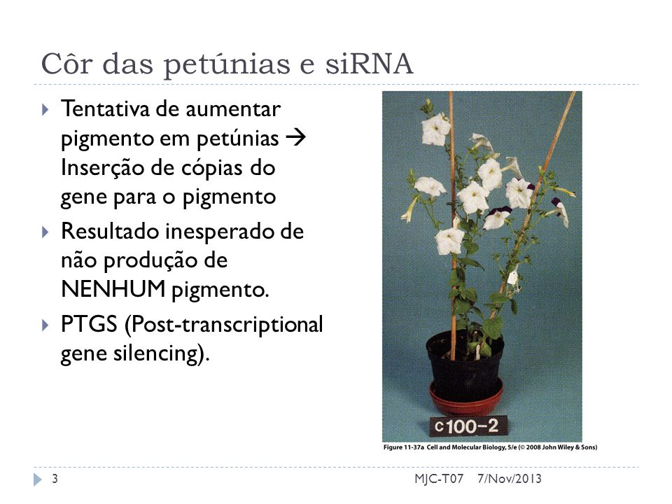 Côr das petúnias e siRNA