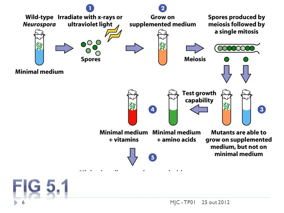 Fig 5.1 MJC - TP01 25 out 2012