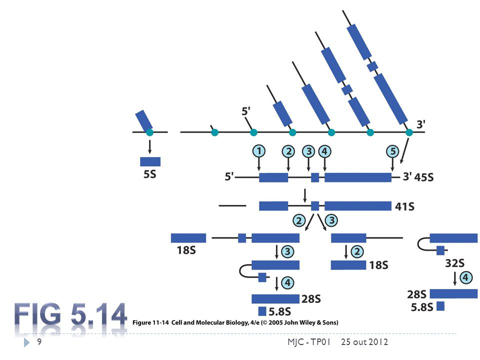 Fig 5.14 MJC - TP01 25 out 2012