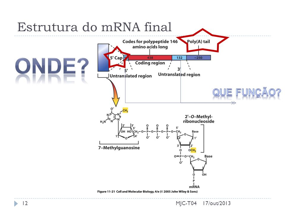 Estrutura do mRNA final