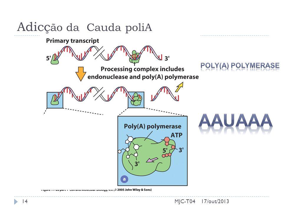 Adicção da Cauda poliA Poly(A) Polymerase AAUAAA MJC-T04 17/out/2013