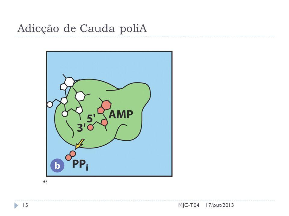 Adicção de Cauda poliA MJC-T04 17/out/2013