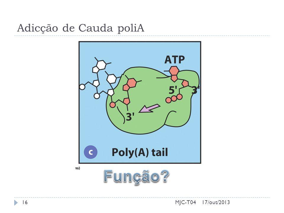 Adicção de Cauda poliA Função MJC-T04 17/out/2013