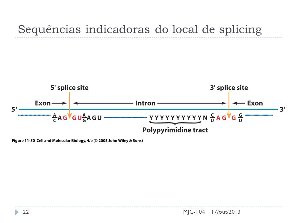 Sequências indicadoras do local de splicing