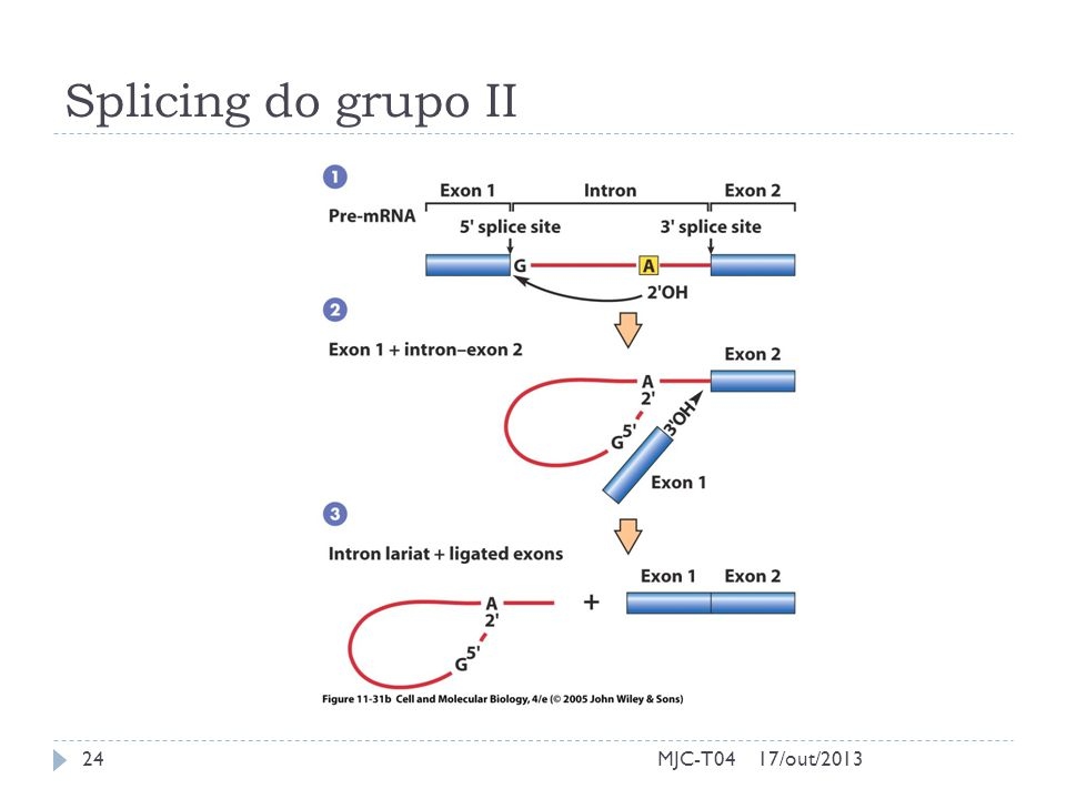 Splicing do grupo II MJC-T04 17/out/2013