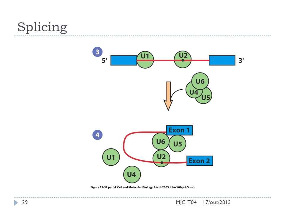 Splicing MJC-T04 17/out/2013